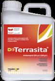 Terrasita